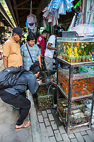 Yogyakarta, Java, Indonesia.  Photographing Fish with a Cell Phone in the Bird Market.