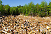 Skidder road from the Kanc 7 Timber Harvest project in the area of Forest Road 567 along the Kancamagus Scenic Byway (route 112) in the White Mountains, New Hampshire.
