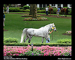 Kentucky Horse Park-Arabians 25