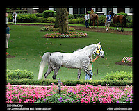 MD Blue Chip  As seen in the Arabian Horse Galleries exhibit at The Kentucky Horse Park.  The 2008 Mandolynn Hill Farm Handicap