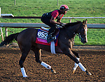 October 27, 2014:  Conquest Harlanate, trained by Mark Casse, exercises in preparation for the Breeders' Cup Juvenile Fillies Turf at Santa Anita Race Course in Arcadia, California on October 27, 2014. Scott Serio/ESW/CSM