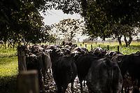 Gado leiteiro <br /> Foto Carlos Borges<br /> 2016