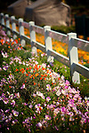 Flowers and fence