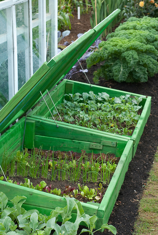 Cold frame with top open with young vegetables 40196