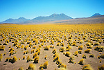 SOLD OUT<br /> <br /> -<br /> <br /> Desierto de Atacama / paja brava / Chile.<br /> <br /> Edición de 3 | Víctor Santamaría.