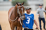 February 17, 2020:Shoplifted (3) with jockey Brian Joseph Hernandez Jr. aboard during the Southwest Stakes at Oaklawn Racing Casino Resort in Hot Springs, Arkansas on February 17, 2020. Ted McClenning//Eclipse Sportswire/CSM