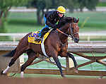 October 26, 2014:  Majestic Harbor, trained by Sean McCarthy, exercises in preparation for the Breeders' Cup Classic at Santa Anita Race Course in Arcadia, California on October 26, 2014. Scott Serio/ESW/CSM
