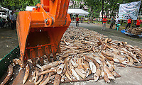 Five tonnes of confiscated ivory from the Philippines stockpile since 2009 is destroyed by excavator at the Philippines Government Protected Areas and Wildlife Bureau of the Department of Environment and Natural Resources, Quezon City, Manila, Philippines, 21 June 2013.