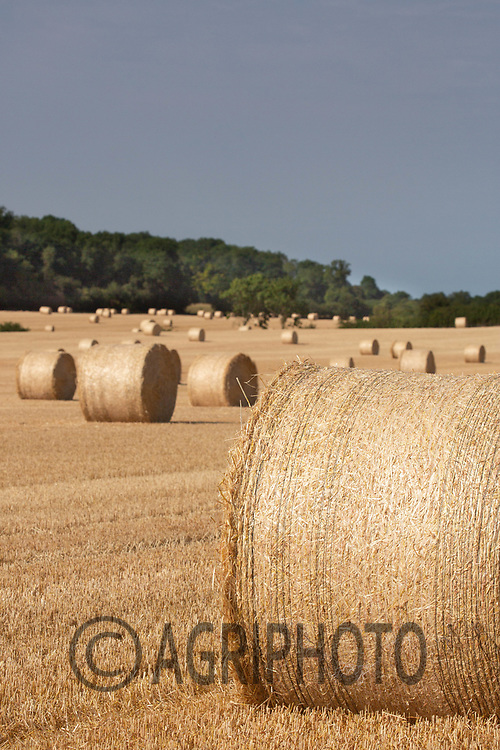Round bales of Barley Straw<br /> ©Tim Scrivener Photographer 07850 303986<br />      ....Covering Agriculture In The UK....