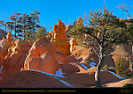 Bryce Canyon Landscape in Winter, Queen's Garden Trail, Bryce Canyon National Park, Utah