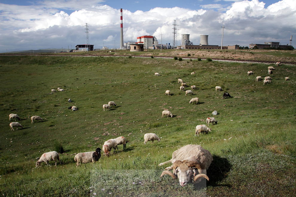 CHINA. Sheep grazing in Xihai Township, or 'Atomic City'. It was the place where China's first atomic bomb was made and tested, on the Qinghai-Tibet Plateau in western China. 2010