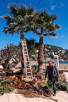 Spanien, Balearen, Ibiza, Beschneiden von Palmen in  Cala de Sant Vincent