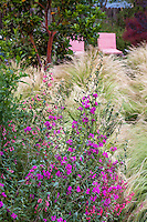 Clarkia unguiculata California annual widflower with Mexican Feather Grass in  Habets meadow garden, Pleasant Hill, California