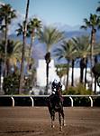 January 30, 2021: Tizamagician and Dreydan Van Dyke at Santa Anita Park in Arcadia, California on January 30, 2021. Evers/Eclipse Sportswire/CSM