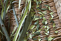 Weiden-Rinde, Weide, Weidenrinde, Rinde wird auf Tablett getrocknet und zu Heilzwecken genutzt, Borke, Willow, bark, rind