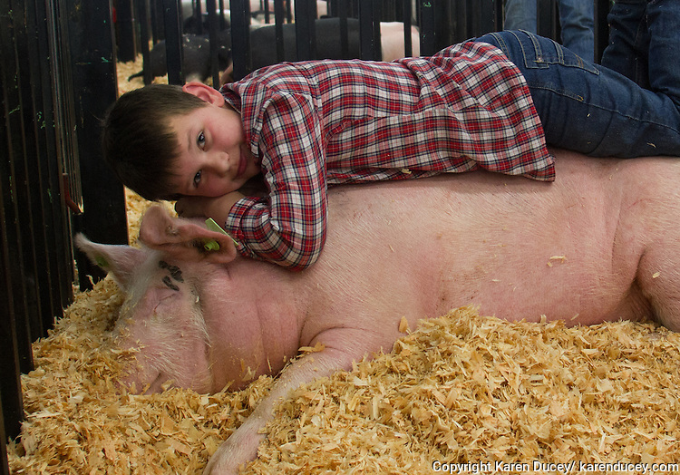 4H student Morgan Olsen, 10, from Mountain Meadow Elementary, lays on his sleeping pig named Goose at the Northwest Junior Livestock Show at the Washington State Spring Fair in Puyallup, Washington on April 17, 2015. Morgan lives on a farm with his family. His father, Dan,  raises pigs for breeding in addition to having cows, dogs, chickens and one horse. His brother, Dillon, 14, also is a 4H student. Morgan says he doesn't want to be a farmer when he grows up.  He wants to be a fun Dad.