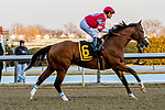MARCH 09, 2019 : Post parade Instagrand & Javier Castellano, the Gotham Stakes for 3-year olds at Aqueduct Racetrack on March  09, 2019 in Ozone Park, NY.  Sue Kawczynski/ESW/CSM