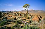Goegap, South Africa, 2004