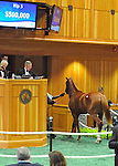 Hip no. 5, a chestnut colt by Distorted Humor (Indy's Windy - A.P. Indy) sells for $500,000 at the Fasig-Tipton Saratoga Selected Yearlings Sale on August 6, 2012 at Humphrey S. Finney Pavilion in Saratoga Springs, New York.  (Bob Mayberger/Eclipse Sportswire)