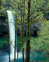 Moss-covered trees below South Falls; Silver Falls State Park, OR