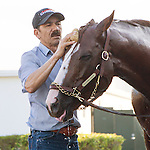 HALLANDALE BEACH, FL - JANUARY 21: California Chrome gets a bath from groom Raul Rodriguez after working 5 furlongs at Gulfstream Park. (Photo by Arron Haggart/Eclipse Sportswire/Getty Images
