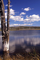 """Goose Lake between Fountain Flats and Fairy Falls, Yellowstone National Park, Wyoming. So called <br /> bobby sock"""" trees get their name from the mineral absorbed through their trunks and roots which eventually cause them to perish."""