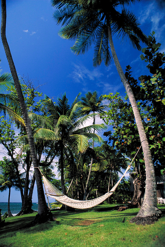 Hammock strung between Palm trees at the Dorado Beach Resort. Dorado Puerto Rico, Caribbean.