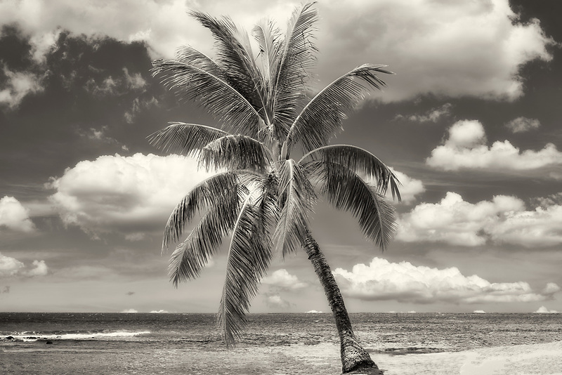 Palm tree and beach. Poipu, Kauai, Hawaii