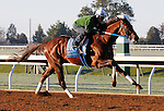 October 18, 2015:  Holy Boss works for trainer Steve Asmussen in preparation for the Breeder's Cup Sprint.  Candice Chavez/ESW/CSM