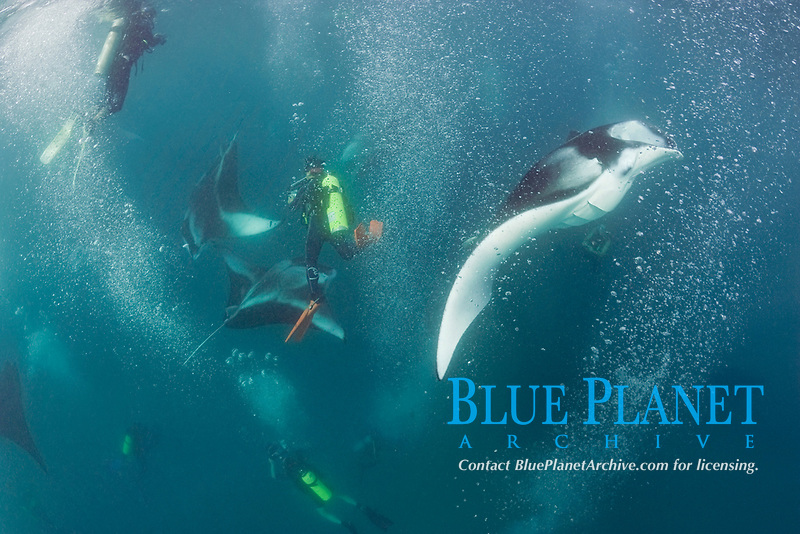 scuba divers photographing reef manta rays, Mobula alfredi, feeding on plankton, Hanifaru Bay, Baa Atoll, Maldives, Indian Ocean