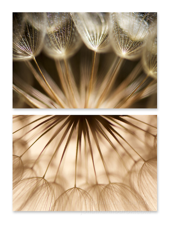 Close-up photographic diptych of a dandelion flower.
