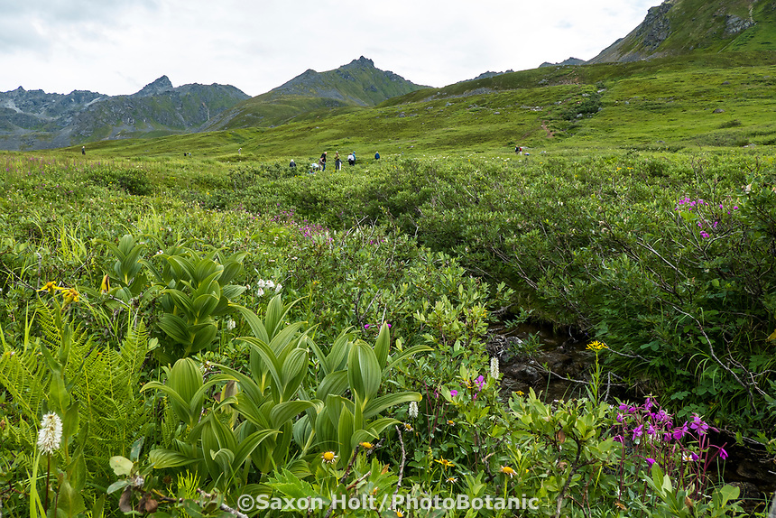 Heath tundra near Hatcher Pass, Alaska,  Independence Mine State Historical Park