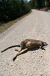 Dead Wallaby