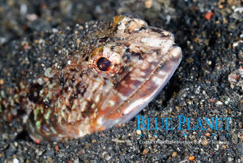 Lembeh Straight, Sulawesi, Indonesia, Pacific Ocean