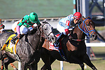 September 07, 2015.  Pure Sensation (#4), Kendrick Carmouche up, wins the Grade III Turf Monster Handicap Stakes by a nose over Mongolian Saturday (#1, with Paco Lopez). Five furlongs, for three-year-olds and upward, at  Parx Racing in Bensalem, PA. Trainer is Christophe Clement; owner is Patricia Generazio. (Joan Fairman Kanes/ESW/CSM)