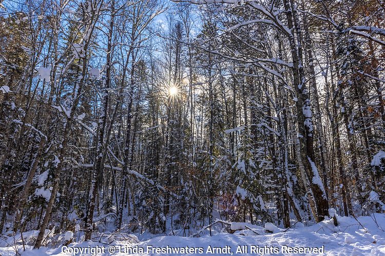 A snowy landscape in the Chequamegon National Forest in northern Wisconsin.