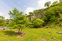 Disused limestone quarry supporting a wide range of vegetation. Miller's Dale, Peak District National Park, Derbyshire, UK. June.