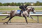 #154Fasig-Tipton Florida Sale,Under Tack Show. Palm Meadows Florida 03-23-2012 Arron Haggart/Eclipse Sportswire.