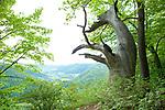 Europa, DEU, Deutschland, Baden-Wuerttemberg, Schwaebische Alb, Bad Urach, Albtrauf, Typische Landschaft, Natur, Umwelt, Landschaft, Jahreszeiten, Stimmungen, Landschaftsfotografie, Landschaften, Landschaftsphoto, Landschaftsphotographie, <br /> <br /> [Fuer die Nutzung gelten die jeweils gueltigen Allgemeinen Liefer-und Geschaeftsbedingungen. Nutzung nur gegen Verwendungsmeldung und Nachweis. Download der AGB unter http://www.image-box.com oder werden auf Anfrage zugesendet. Freigabe ist vorher erforderlich. Jede Nutzung des Fotos ist honorarpflichtig gemaess derzeit gueltiger MFM Liste - Kontakt, Uwe Schmid-Fotografie, Duisburg, Tel. (+49).2065.677997, ..archiv@image-box.com, www.image-box.com]