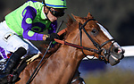 DEL MAR, CA - NOVEMBER 04: Good Magic #6, ridden by Jose Ortiz, closes on the finish during the Sentient Jet Breeders' Cup Juvenile race on Day 2 of the 2017 Breeders' Cup World Championships at Del Mar Racing Club on November 4, 2017 in Del Mar, California. (Photo by Jamey Price/Eclipse Sportswire/Breeders Cup)
