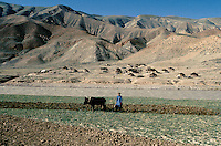 A farmer boy working in is field with is two cow and a Kuchi camps on the other side of the Harï Rüd river, on the road to the Menar e Jam in the Ghor province - Afghanistan..From western Afghan capital Herat to the former capital of the Ghorides Empire Fîrûzkôh, next to the Menar e Jam..-The full text reportage is available on request in Word format