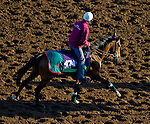 October 28, 2014:  Veda, trained by Alain de Royer-Dupre, exercises in preparation for the Breeders' Cup Filly & Mare Turf or Mile at Santa Anita Race Course in Arcadia, California on October 28, 2014. John Voorhees/ESW/CSM