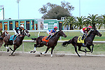 February 21, 2015:  In the first turn during the Mineshaft Handicap at the New Orleans Fairgrounds Risen Star Stakes Day. Steve Dalmado/ESW/CSM