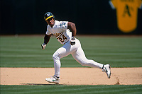 OAKLAND, CA - Rickey Henderson of the Oakland Athletics runs the bases during a game at the Oakland Coliseum in Oakland, California in 1998. (Photo by Brad Mangin)