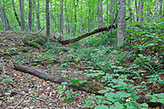 Remnants of the Jackman Brook Branch (near the end of the line) of the Gordon Pond Railroad (logging railroad, 1907-1916) in Woodstock, New Hampshire.