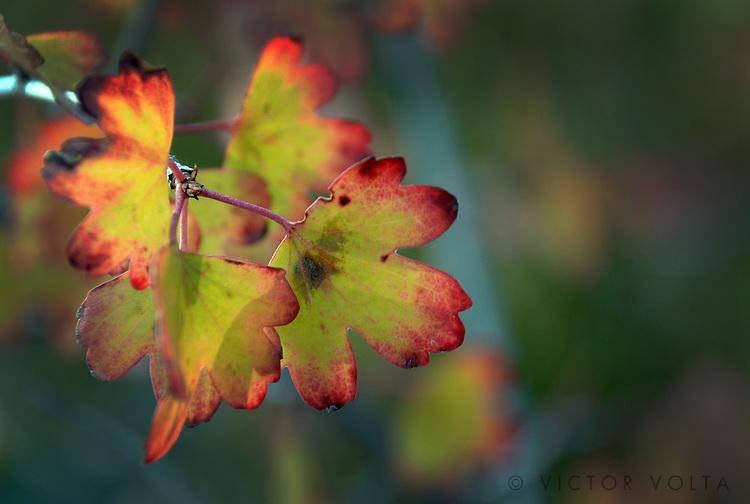Fall Colors near Taylor Creek, Lake Tahoe