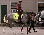 LOUISVILLE, KY - APRIL 19: Lani (Tapit x Heavenly Romance, by Sunday Silence) goes to the track at Churchill Downs, Louisville KY.Owner Ms. Yoko Maeda, trainer Mikio Matsunaga. (Photo by Mary M. Meek/Eclipse Sportswire/Getty Images)