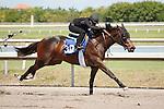 #30Fasig-Tipton Florida Sale,Under Tack Show. Palm Meadows Florida 03-23-2012