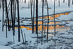 USA, Wyoming, Yellowstone National Park, landscape
