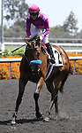 Obviously (IRE) with Joe Talamo aboard wins the Grade II American Handicap at Betfair Hollywood Park in Inglewood, California on May 25, 2013 (Zoe Metz/ Eclipse Sportswire)
